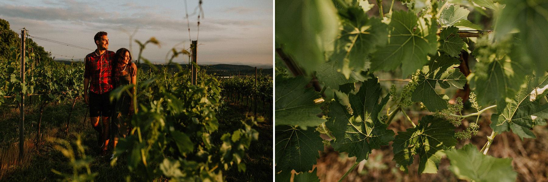 vineyard krakow srebrna góra