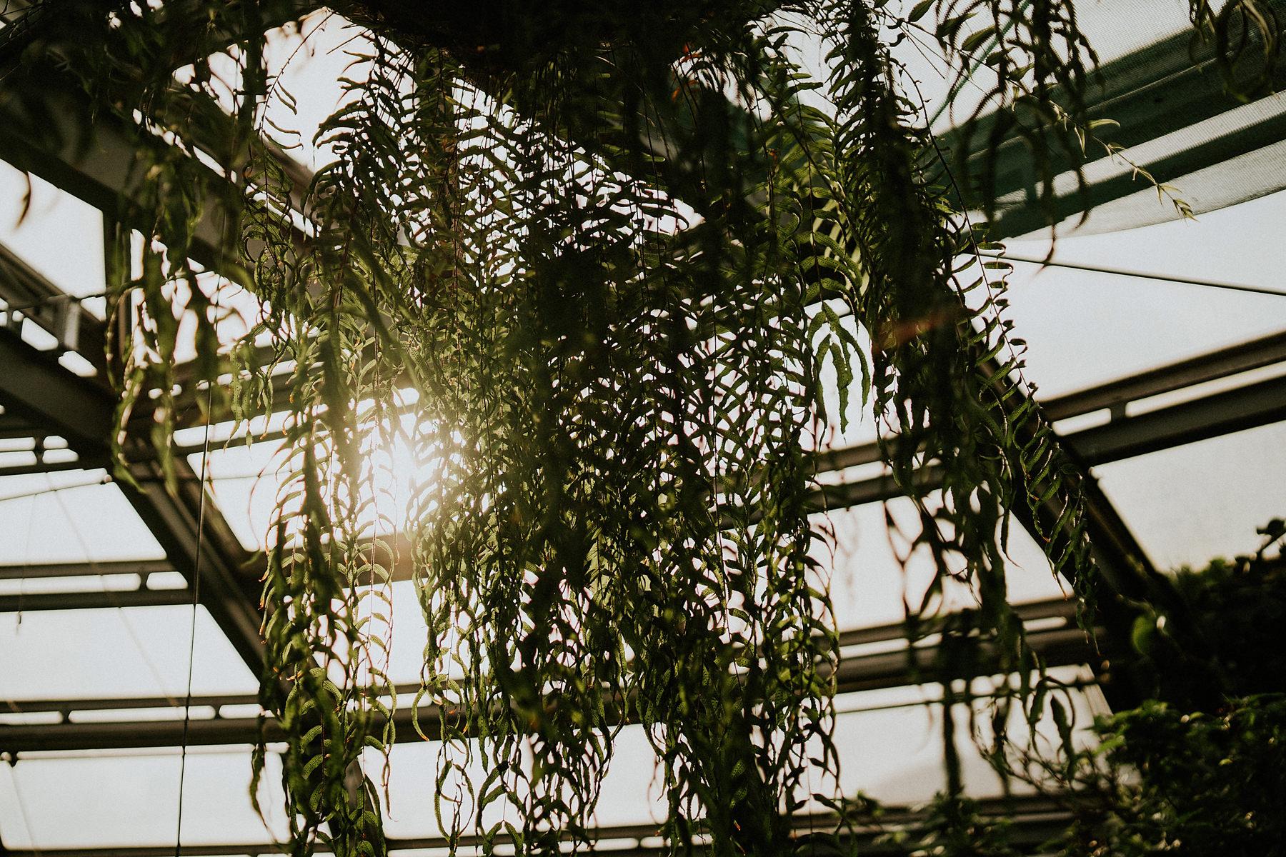 ogród botaniczny kraków sesja