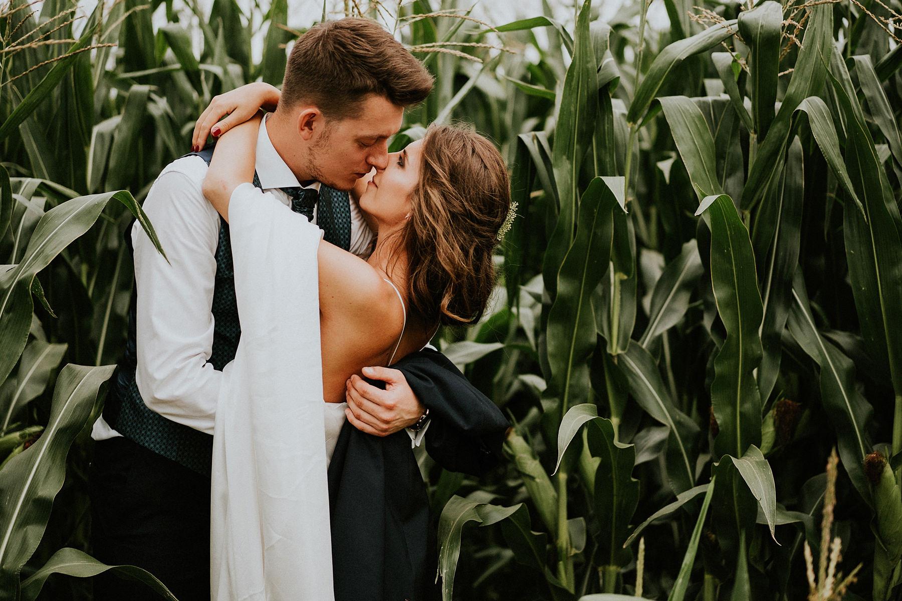 sesja ślubna w polu kukurydzy